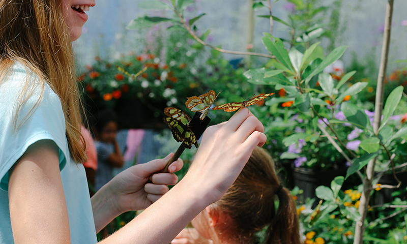 Atlanta Convention and Visitors Bureau_Ultimate List of Things To Do in Atlanta for Nature Lovers_Chattahoochee Nature Center Butterfly Encounter_Benjamin A Pete Photography.jpg