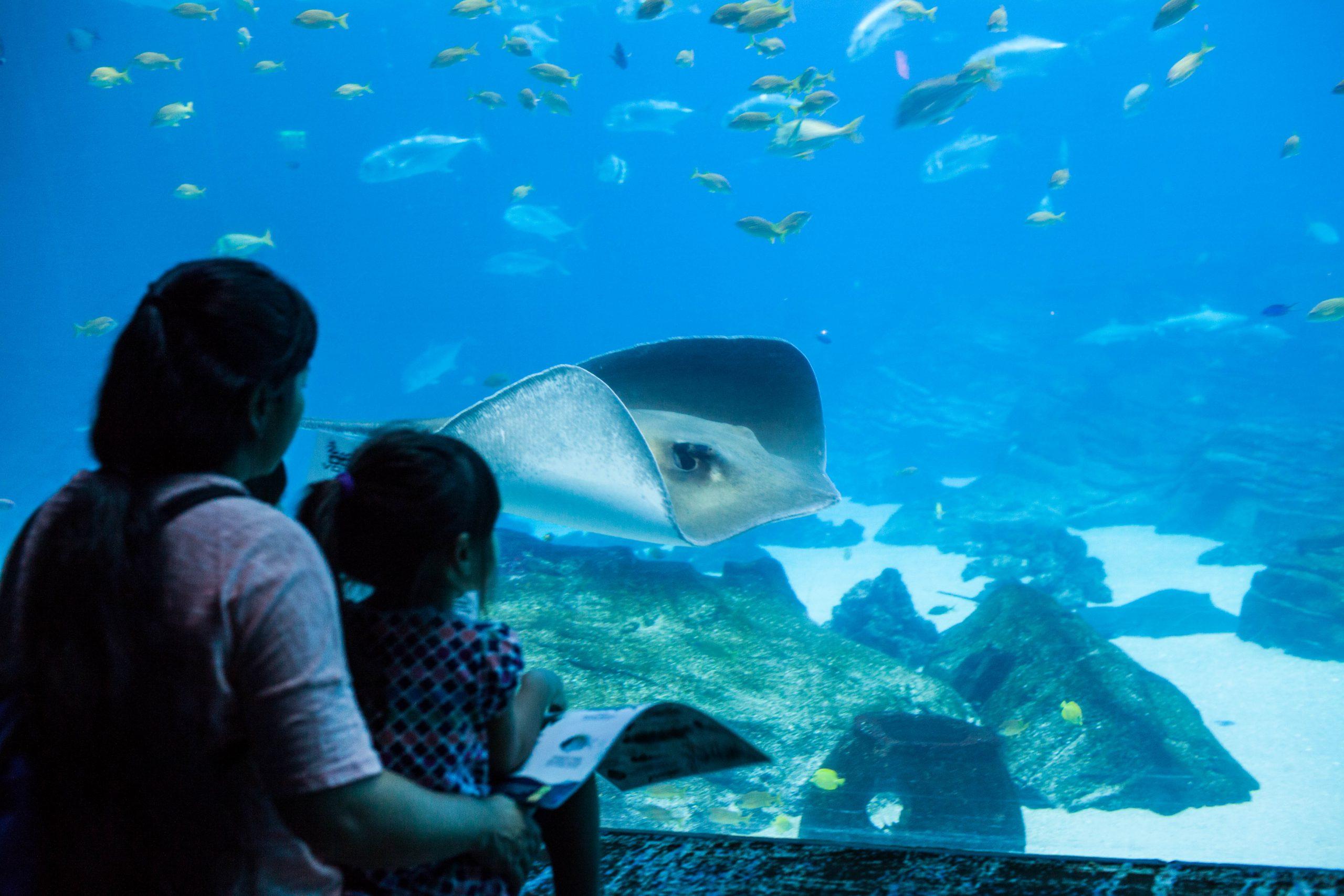 Dive in without getting wet at Georgia Aquarium in Atlanta