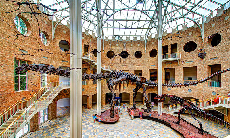 The Giants of the Mesozoic will take your breath away at Fernbank Museum of Natural History